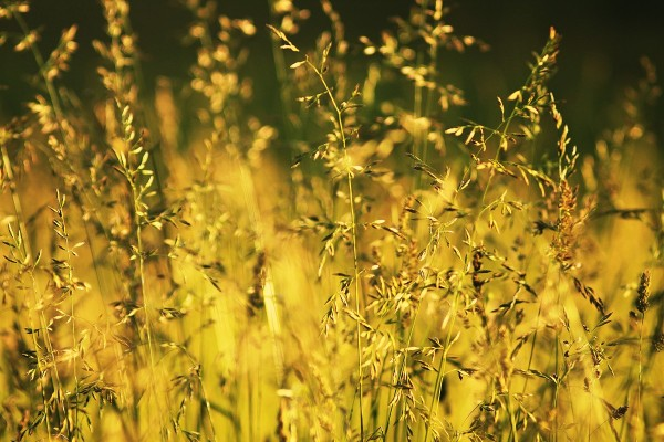Трава и солнце. Гармония