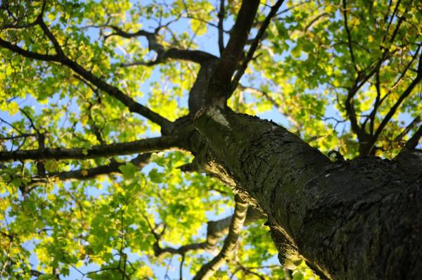 Дерево, небо, свобода