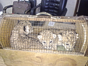 3-cubs-web