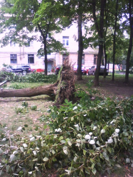 упавшее_дерево