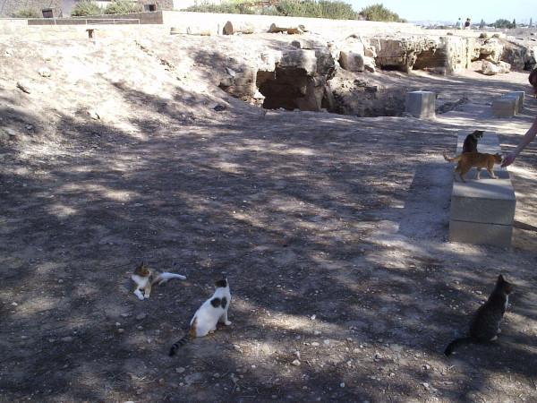 неа_пафос_кошки