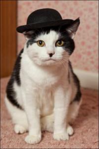 masons_chaplin_cat_06