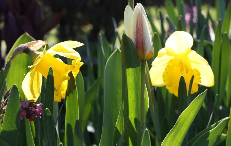 Ботанический сад Май 2014 031