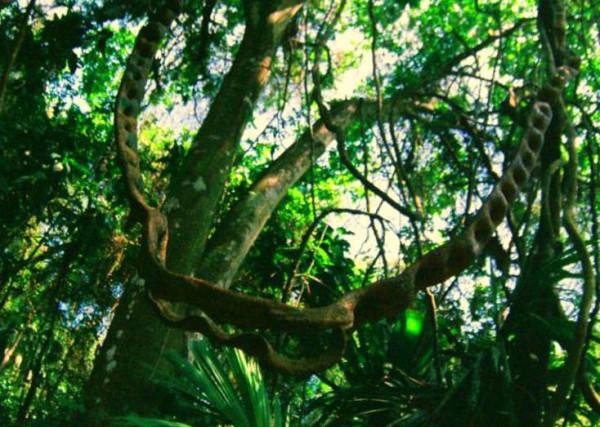 jungle4_1_resize