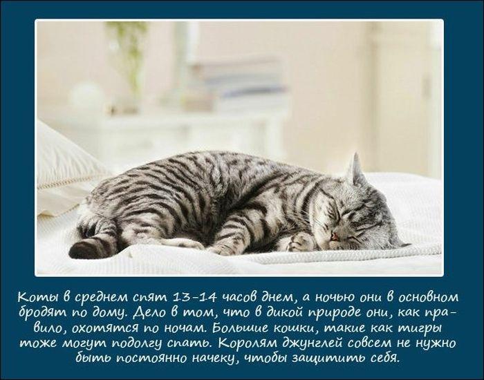 1343992475__sleeping_animals_02