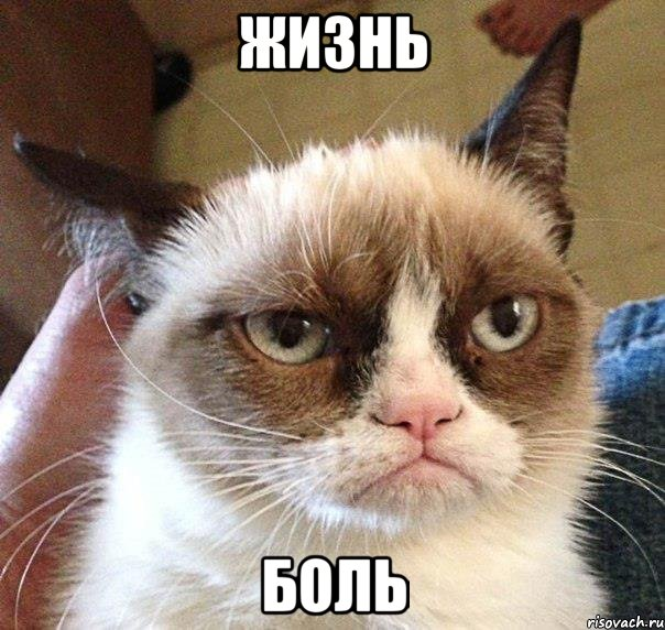 grustnyy-kot_29133732_orig_