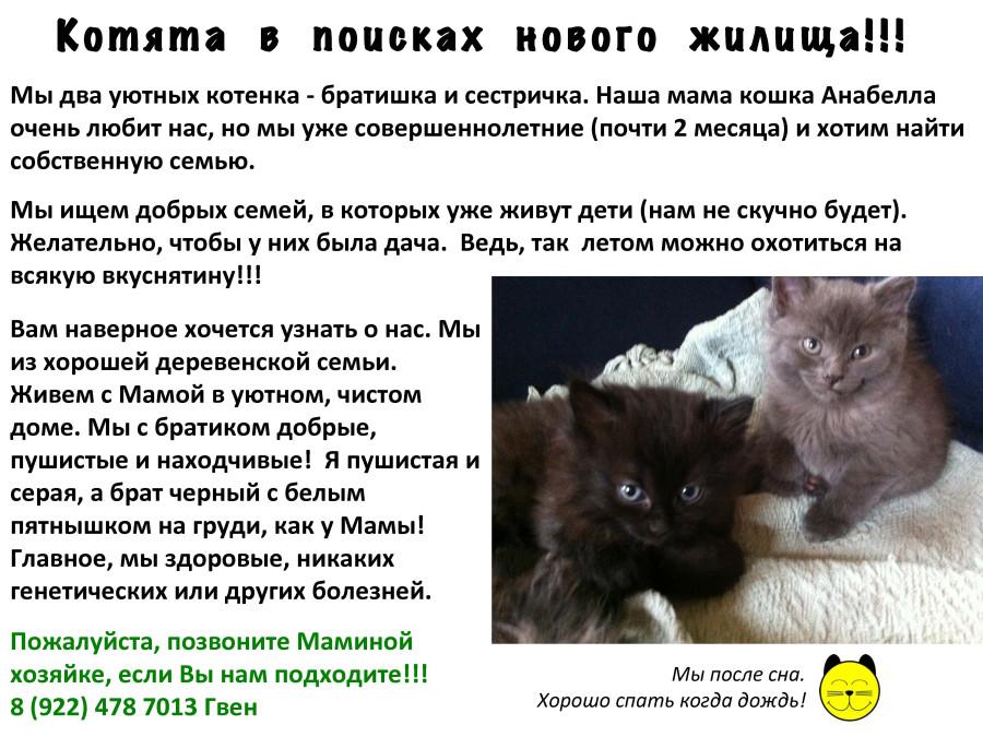 Картинки объявлений котят