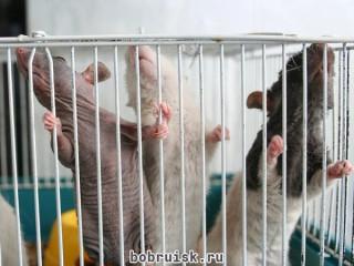 В Бобруйске будет создан сайт о животных