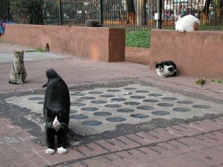 Коты нашего двора