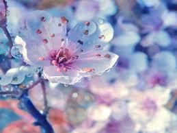 весна1