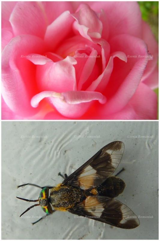 Мраморные розы Енисейск Ваза. Токовский гранит Балашов