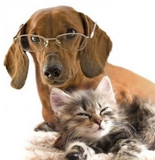 Фотоконкурс: кошки против собак.
