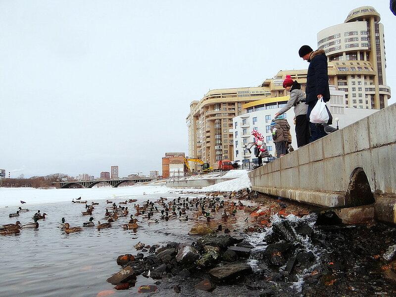все фото уток сделаны kssernik на Нижне-Исетском пруду