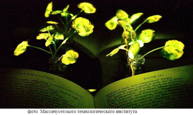 Пока в России запрещают ГМО, в США появились растения-светильники