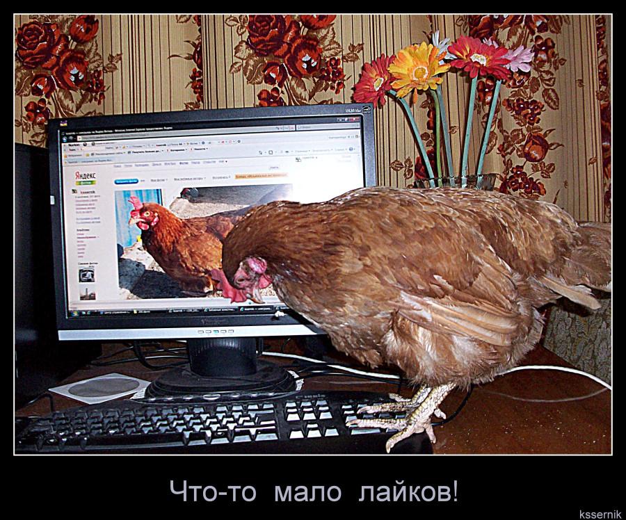 курица в соцсетях