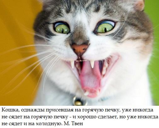 Кошка и печка.jpg