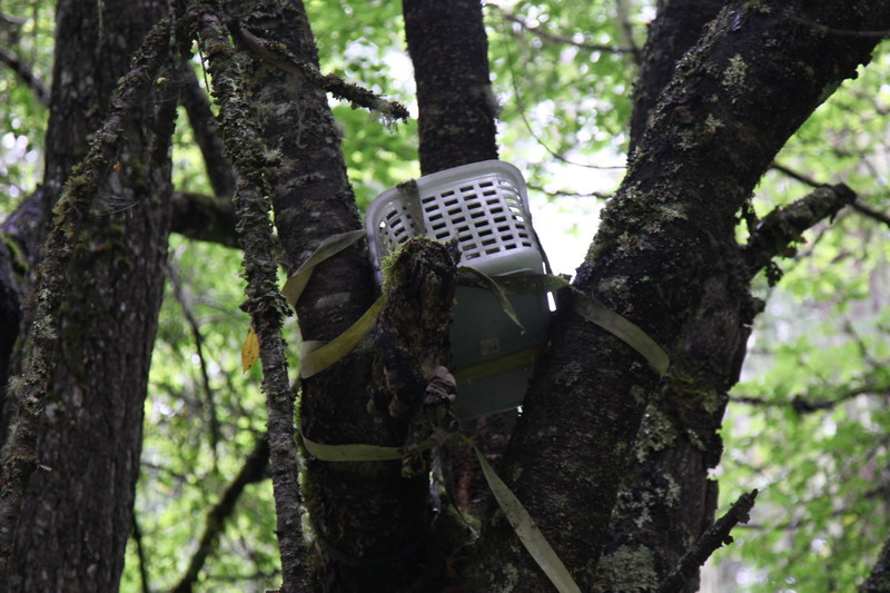 tree-019