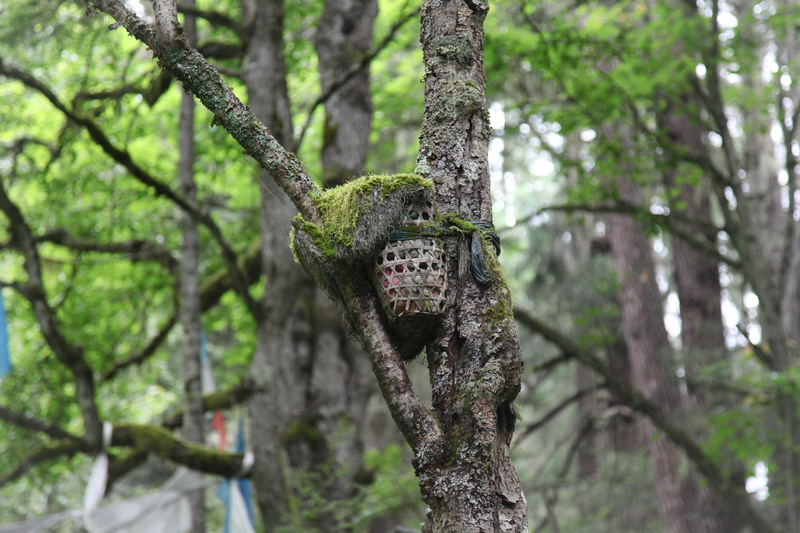 tree-022
