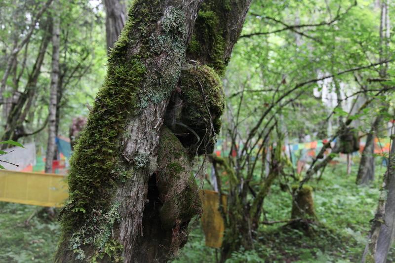 tree-031