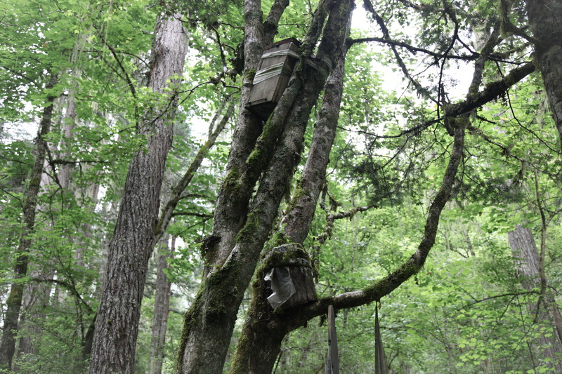 tree-032