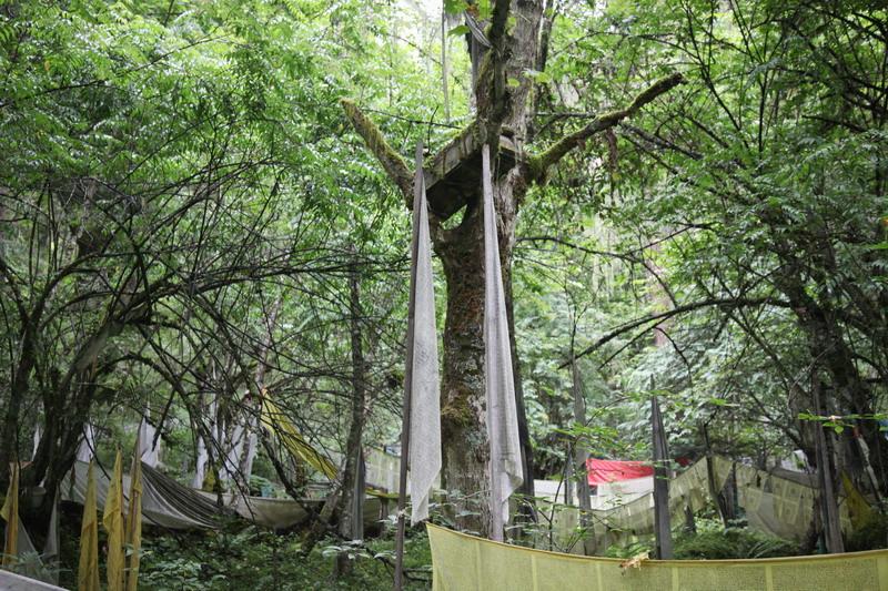 tree-034