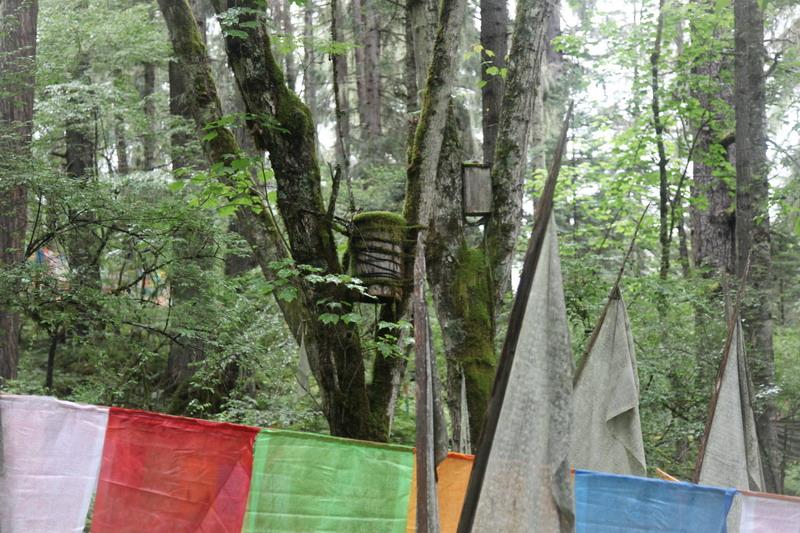 tree-039