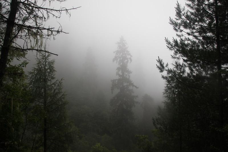 tree-050