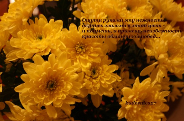 IMG_0771c