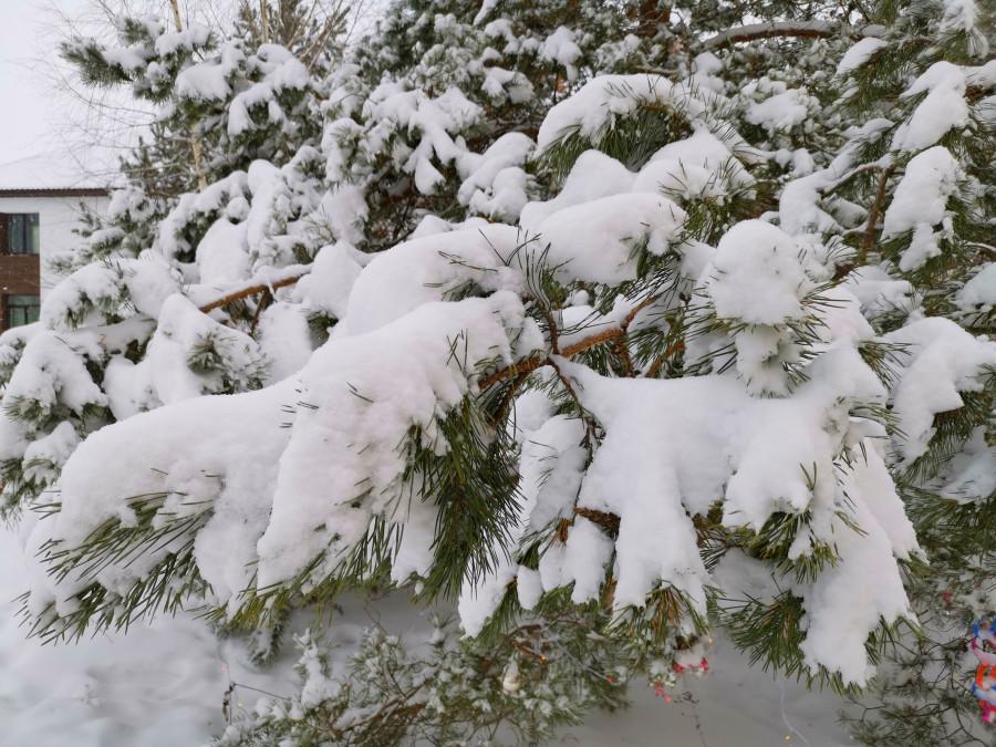 Доброе утро! Снегу навалило у нас по макушку :))