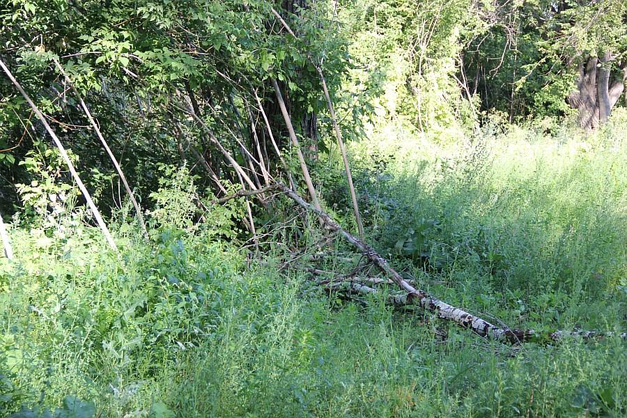 Парк Молодоженов Казань Блогер против мусора 2012 Зеленый парк  06