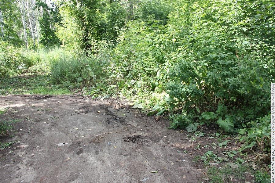 Парк Молодоженов Казань Блогер против мусора 2012 Зеленый парк  19