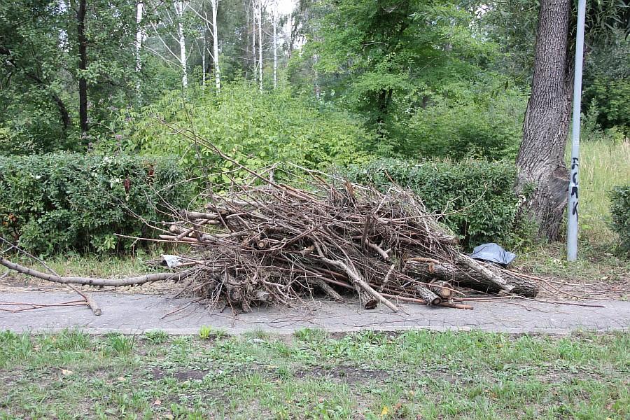 Парк Молодоженов Казань Блогер против мусора 2012 Зеленый парк  52