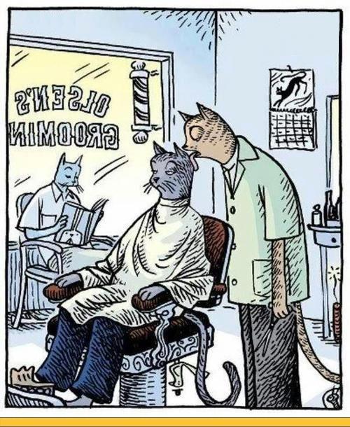 коты-стрижка-парикмахерская-арт-390941