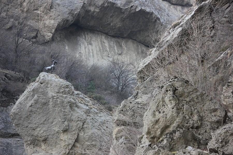 Аргун, Ушкалойские сторожевые башни, фотография, Аксанов Нияз, kukmor, Чечня, путешествия of IMG_3098