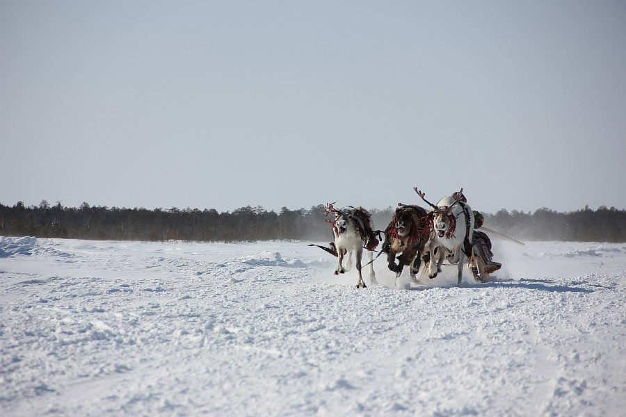 Олени, Русскинская, гонки, фотография, Аксанов Нияз, kukmor, Сургут, ХМАО, of IMG_4106