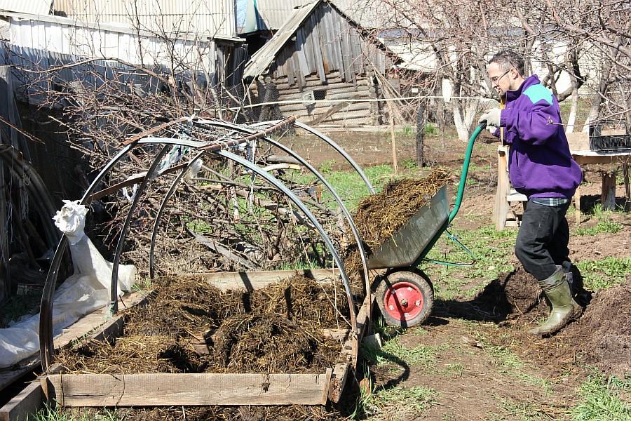 Кукмор, kukmor, Аксанов Нияз, фотография, огород, садоводство, огурцы, теплица, фотография,  of IMG_5902