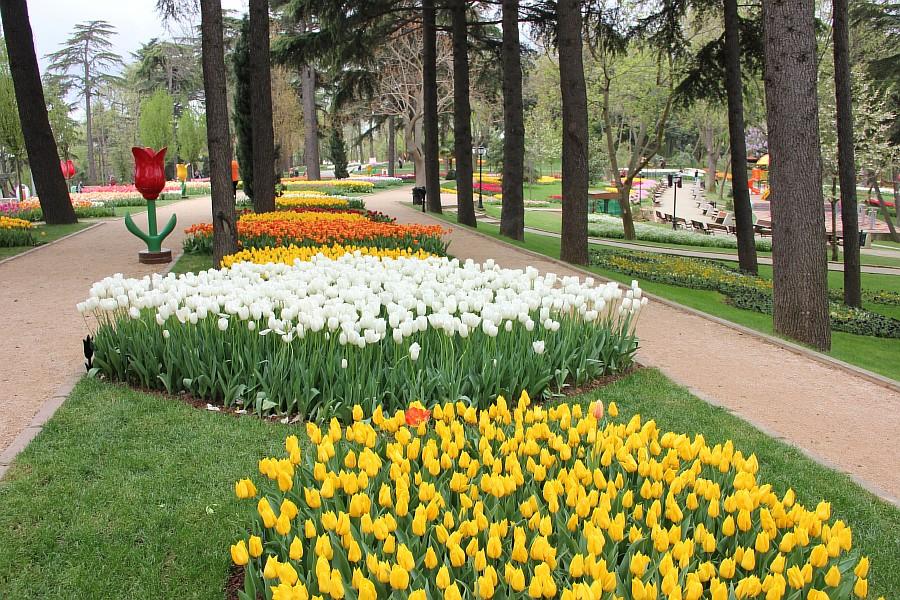 Цветы, тюльпаны, Эмирган, Стамбул, путешествия, Аксанов Нияз, фотография, Emirgan, Istanbul, kukmor, of IMG_4268
