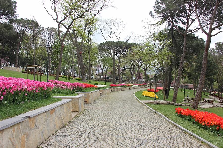 Цветы, тюльпаны, Эмирган, Стамбул, путешествия, Аксанов Нияз, фотография, Emirgan, Istanbul, kukmor, of IMG_4356