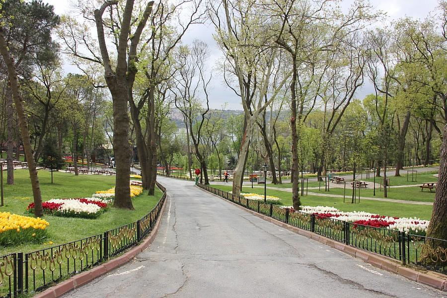 Цветы, тюльпаны, Эмирган, Стамбул, путешествия, Аксанов Нияз, фотография, Emirgan, Istanbul, kukmor, of IMG_4359