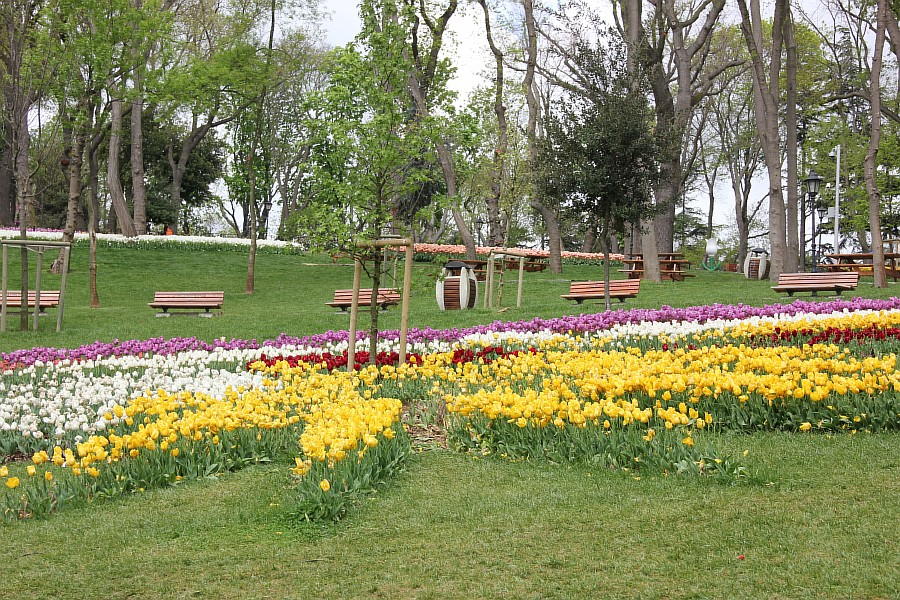 Цветы, тюльпаны, Эмирган, Стамбул, путешествия, Аксанов Нияз, фотография, Emirgan, Istanbul, kukmor, of IMG_4362