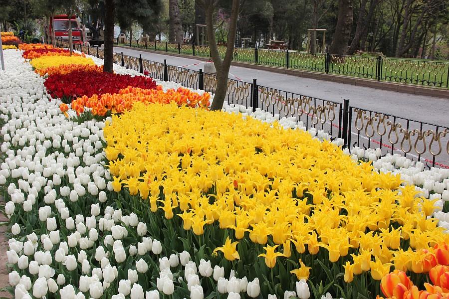 Цветы, тюльпаны, Эмирган, Стамбул, путешествия, Аксанов Нияз, фотография, Emirgan, Istanbul, kukmor, of IMG_4365