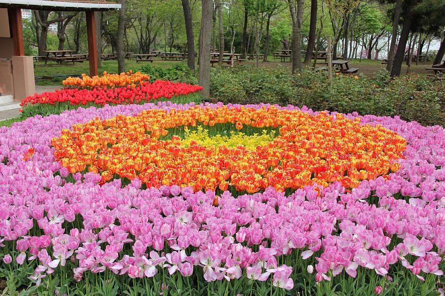 Цветы, тюльпаны, Эмирган, Стамбул, путешествия, Аксанов Нияз, фотография, Emirgan, Istanbul, kukmor, of IMG_4377