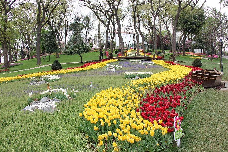Цветы, тюльпаны, Эмирган, Стамбул, путешествия, Аксанов Нияз, фотография, Emirgan, Istanbul, kukmor, of IMG_4380