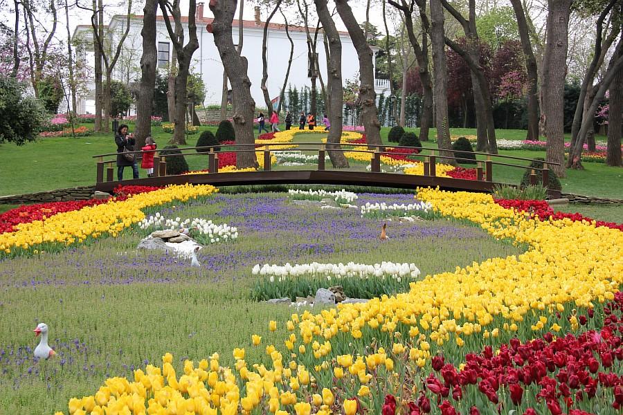 Цветы, тюльпаны, Эмирган, Стамбул, путешествия, Аксанов Нияз, фотография, Emirgan, Istanbul, kukmor, of IMG_4383