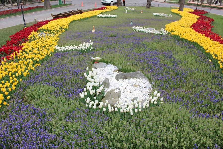 Цветы, тюльпаны, Эмирган, Стамбул, путешествия, Аксанов Нияз, фотография, Emirgan, Istanbul, kukmor, of IMG_4389