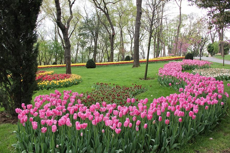 Цветы, тюльпаны, Эмирган, Стамбул, путешествия, Аксанов Нияз, фотография, Emirgan, Istanbul, kukmor, of IMG_4394