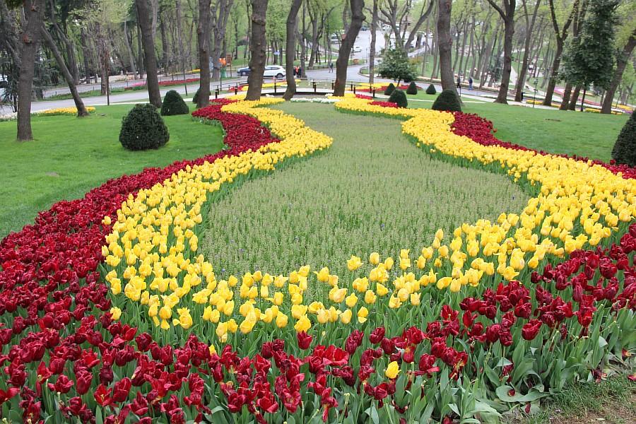 Цветы, тюльпаны, Эмирган, Стамбул, путешествия, Аксанов Нияз, фотография, Emirgan, Istanbul, kukmor, of IMG_4395