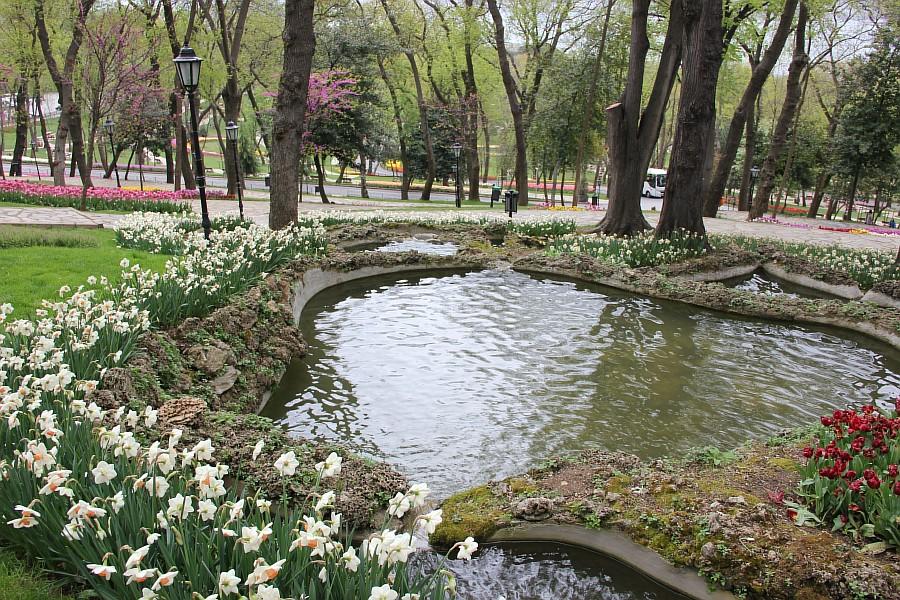 Цветы, тюльпаны, Эмирган, Стамбул, путешествия, Аксанов Нияз, фотография, Emirgan, Istanbul, kukmor, of IMG_4400