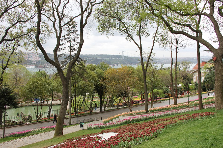 Цветы, тюльпаны, Эмирган, Стамбул, путешествия, Аксанов Нияз, фотография, Emirgan, Istanbul, kukmor, of IMG_4401