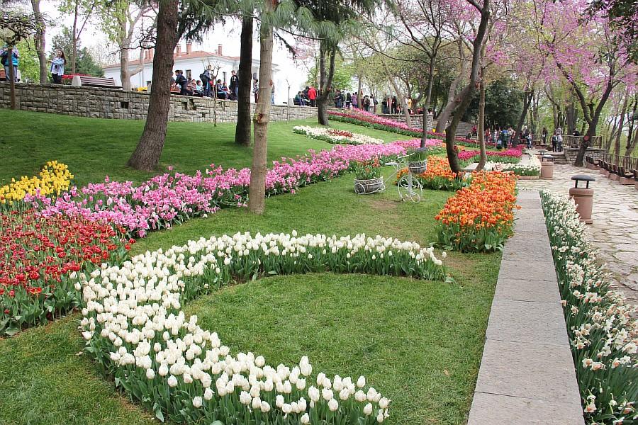 Цветы, тюльпаны, Эмирган, Стамбул, путешествия, Аксанов Нияз, фотография, Emirgan, Istanbul, kukmor, of IMG_4405